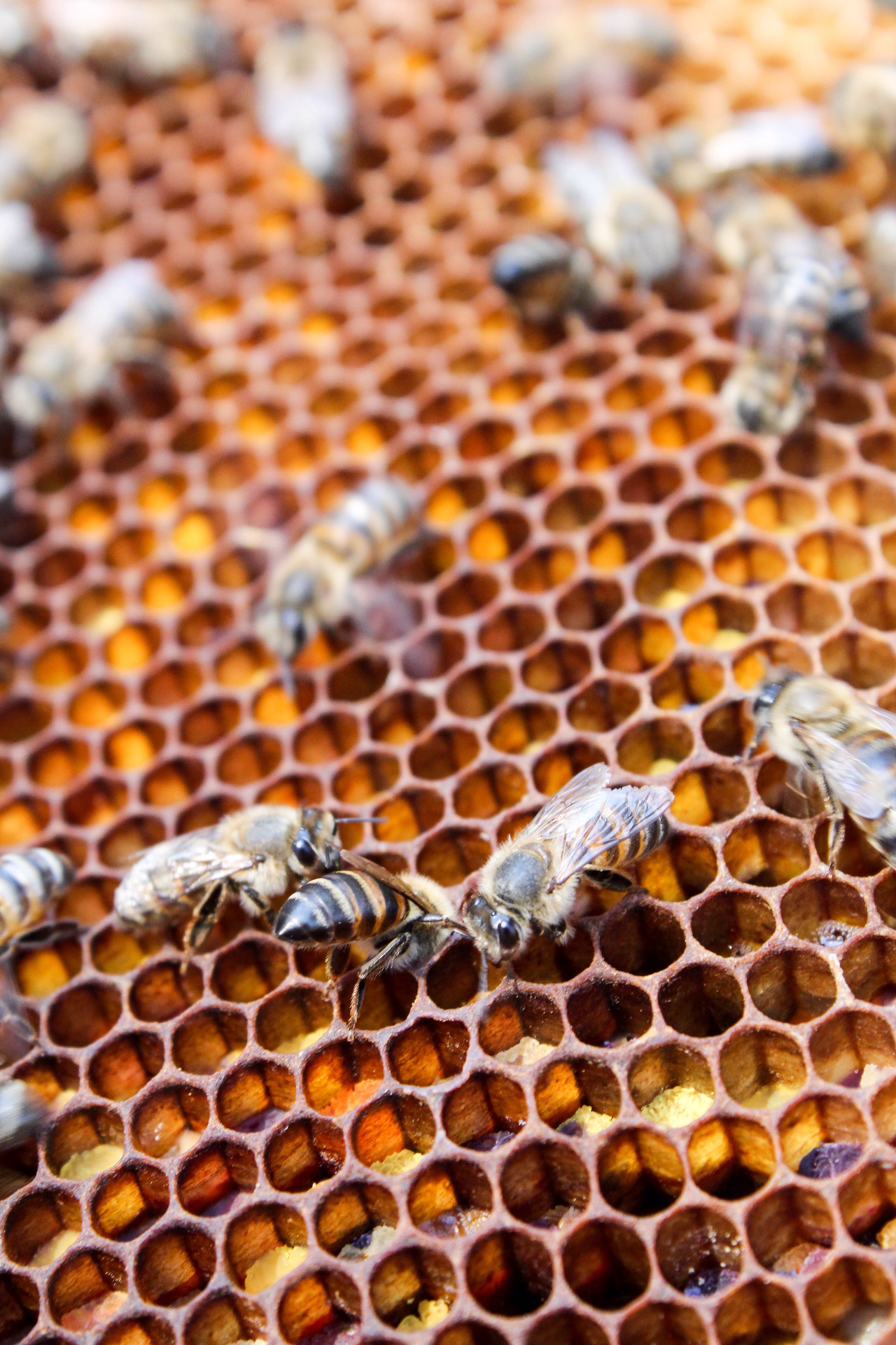 bees research paper A paper published in the journal nature discusses how bees are twice as likely to die when exposed to pesticides two-thirds of the bees are lost when exposed compared to a third when not exposed the exposed bees are also half as successful in gathering food.