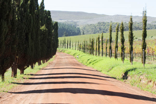 Wine Region Trip 222