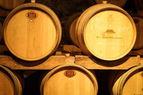 Wine Region Trip 296