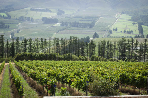 Wine Region Trip 343