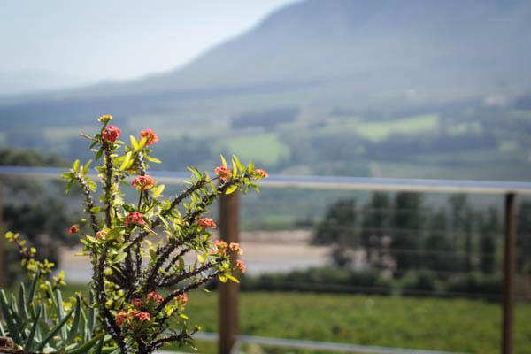 Wine Region Trip 358