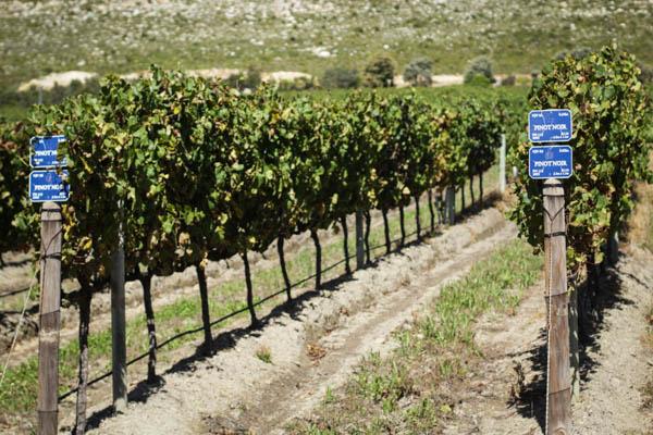Wine Region Trip 382