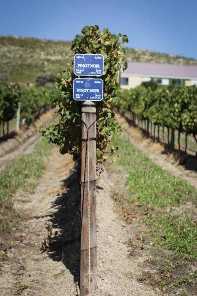 Wine Region Trip 383