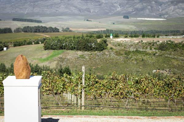 Wine Region Trip 395