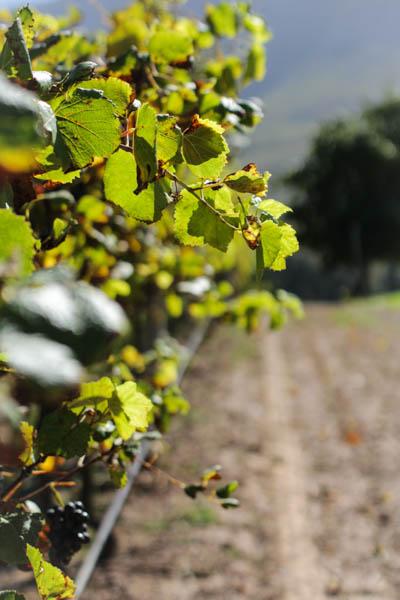 Wine Region Trip 410