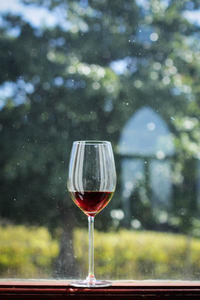 Wine Region Trip 449