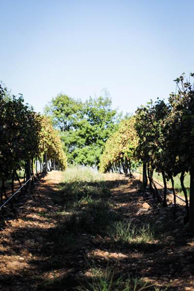 Wine Region Trip 476
