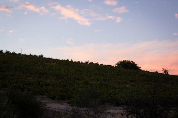 Wine Region Trip 515